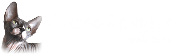 Ebano Sphynx